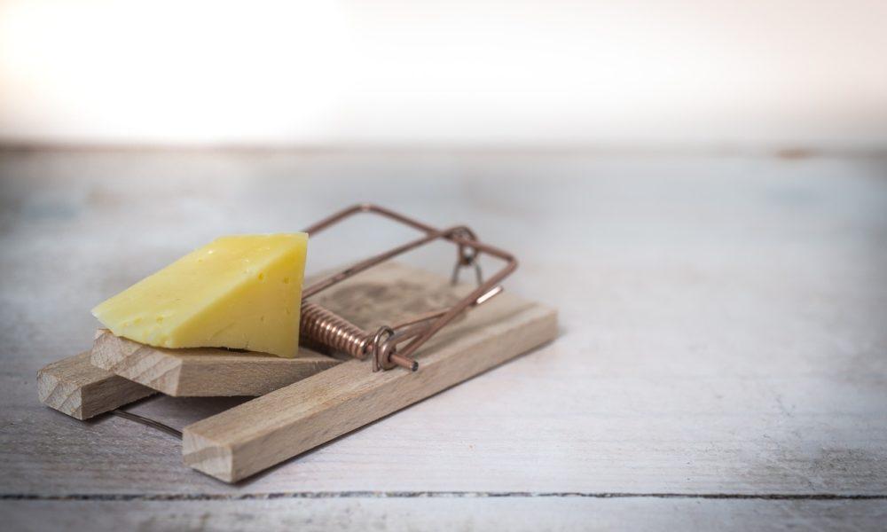 Deratyzacja – czym ona jest?